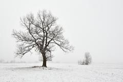 snowy winter landscape with tree - stock photo