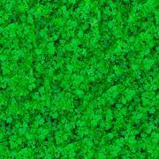 Seamless Texture. Grass. Stock Photos