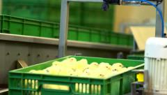 Small chickens in box on production line at chicken farm. Poultry farm conveyor Stock Footage