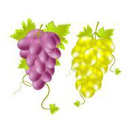 Two tassels of grape Stock Illustration