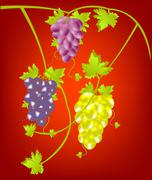 grapevine on red background - stock illustration