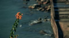 Flowers and ocean Stock Footage