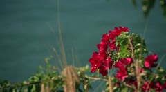 Flowers and ocean Stock Footage