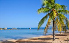Palm tree on caribbean beach Stock Photos