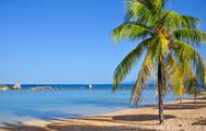 Stock Photo of palm tree on caribbean beach