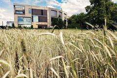 post-modern architecture behind wheat field - stock photo