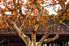 ancient chinese roof autumn leaves west lake hangzhou zhejiang china - stock photo