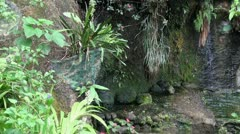 Jungle nature scene with dropping water Stock Footage