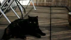 Beautiful Cute Lazy Black Cat laying in the Sun Stock Footage