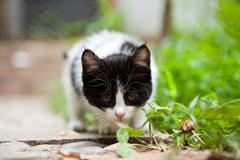 vigilance cat - stock photo
