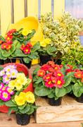 display of fresh flowers at the market - stock photo