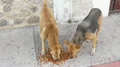 Three Stray Dogs Eating Solid Dog Food Stock Footage