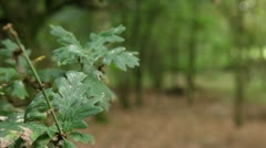 Green leaf forest background 01 Stock Footage