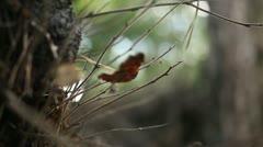 Leaf on tree trunk 01 Stock Footage