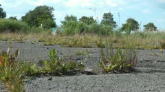 Abandoned parking lot covered by grass Stock Footage