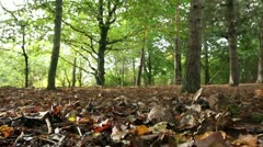 Low view through the forest Stock Footage