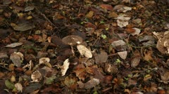 Mushrooms and fungi in the woods 03 Stock Footage