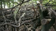 Stack of small branches 01 Stock Footage