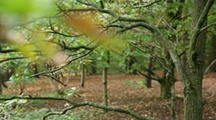 View through the trees Stock Footage