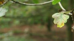 Wet leaf forest background 01 Stock Footage