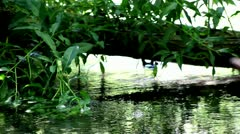 Stream in the forest and green plants,plants in stream,creek,brook - stock footage