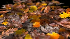 Leaves Blowing Away Stock Footage