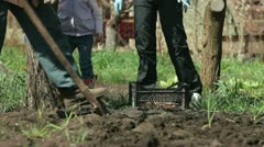 Family Planting Potatoes on Smallholder Farm Stock Footage