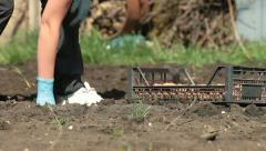 Gardener Planting Potatoes on Smallholder Farm Stock Footage