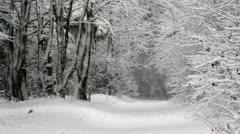 Stock Video Footage of Snow falling on big evergreens,snowfall on trees,snowfall