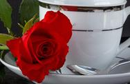 Stock Photo of rose on a coffee cup