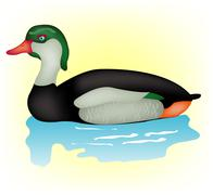 duck sails in water - stock illustration