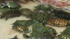 Turtles in Pool Stock Footage