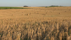 Evening view of a large harvested field with straw roll hay bales. Stock Footage