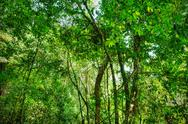 Stock Photo of sacred african rainforest
