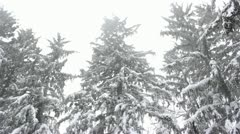 Snow falling on tops of evergreen trees,snowfall on trees,snowfall Stock Footage
