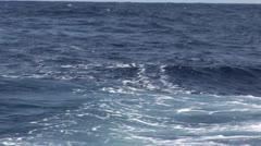 Stock Video Footage of Baiting Sailfish in Hawaii