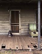 Dog Guarding the Valuable Property - stock photo