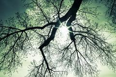 Sunburst through tree branches Stock Photos