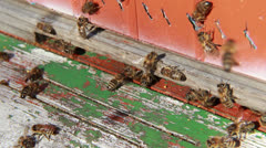 Group of bees at the entrance to the hive. Close up shot. Stock Footage