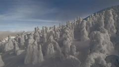 Snow covered trees on mountain slope in Canadian Winter Stock Footage
