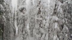 Stock Video Footage of snowy covered evergreen trees in Canadian Winter