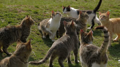 Wild cats Stock Footage