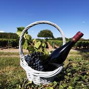 red wine spirit - stock photo