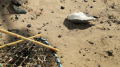 headless seagull dead on beach with fishing nets - stock footage
