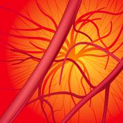 Blood system Stock Illustration
