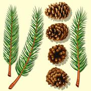 pine tree branches and cones - stock illustration