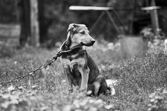 Sitting Dog - stock photo