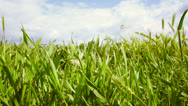 Stock Video Footage of Filming along a meadow with green grass and cloudy sky