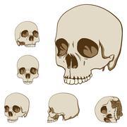 five skulls set - stock illustration