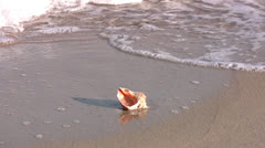 Seashell Stock Footage